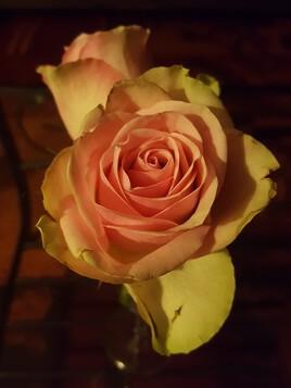 Délicate fleur
