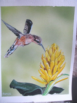 colibri petit ermite et une fleur jaune