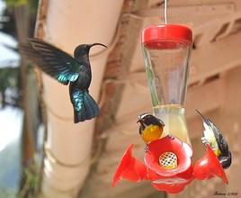 colibri 3