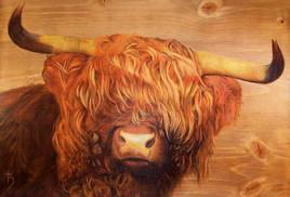 Cornes d'acier - Highland d'écosse