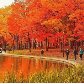 the fall colours