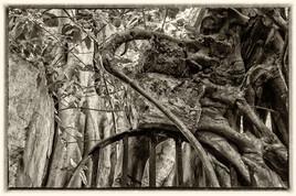 la prison emprisonnée 7 (Petit Canal - Guadeloupe) tirage dibond® 40 x 60 cm