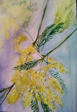 Branche de mimosa