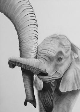 Éléphanteau guidé par maman