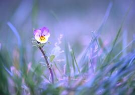 Délicatesse  Florale