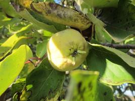 Fruit du soleil