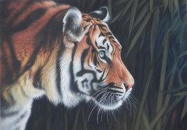 Tigre dans la forêt