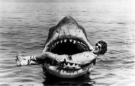 le cure-dent du squal