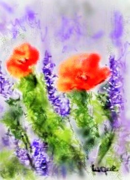Fleurs du soleil