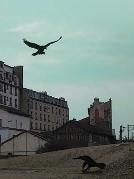 Chronique Altoséquanaise : Asnières sur Seine