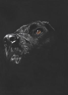 chien dans la pénombre