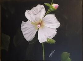 Naissance d'une fleur