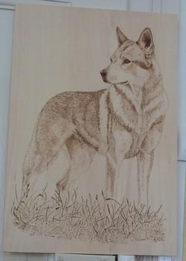 le chien-loup