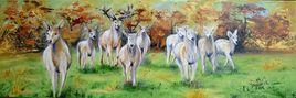 Le cerf blanc et son harem