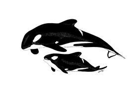 Baleine tueuse