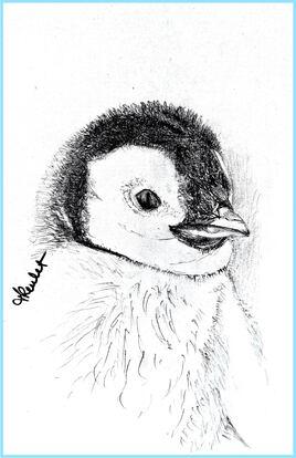 Manchot empereur bébé (Aptenodytes forsteri) / Emperor penguin baby