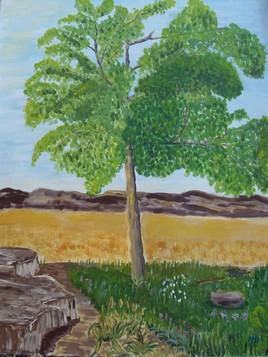 L'arbre dans la Sierra de Guara...