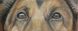 les yeux de CIROKO...parti trop tot