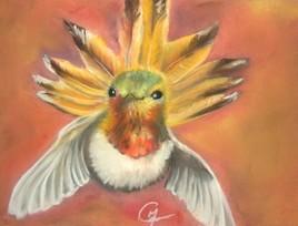 Colibri roux du Canada