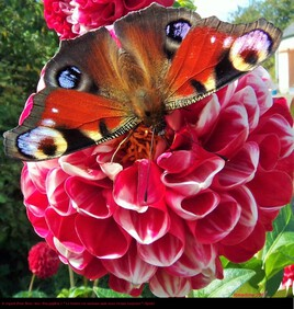 le regard d'une fleur .. heu d'un papillon ! :)