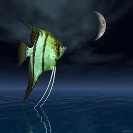 Rêve ordinaire du poisson domestique