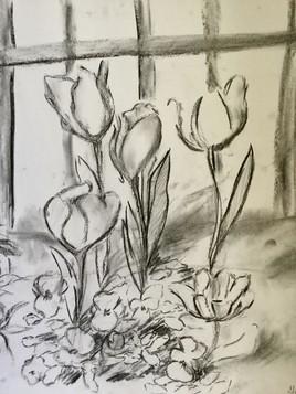 tulipe1