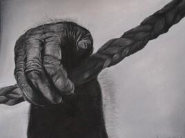 Main de gorille aux pastels secs