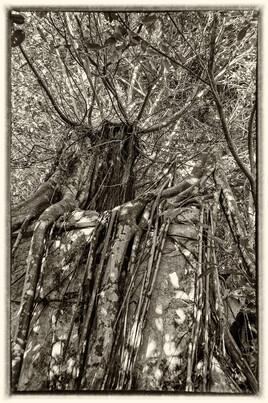 La prison emprisonnée 14 (Petit Canal - Guadeloupe) tirage dibond® 40 x 60 cm