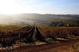 Toscane - Vignoble