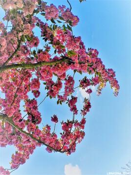 le printemps se profile ! :)