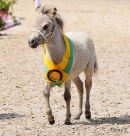 Photo Mini cheval