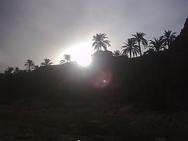 lumiere entre les palmiers