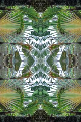 Palmes sous le vent