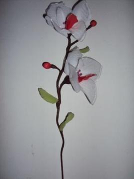 orchidée à fleurs blanches