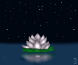 Lotus Flower ~