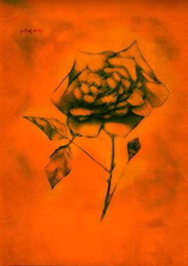 blooding rose