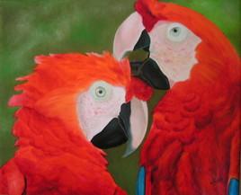 La beauté des perroquets
