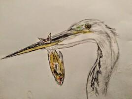 Oiseau pecheur