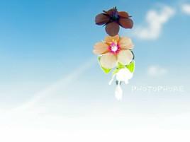 Reflets de fleurs 1
