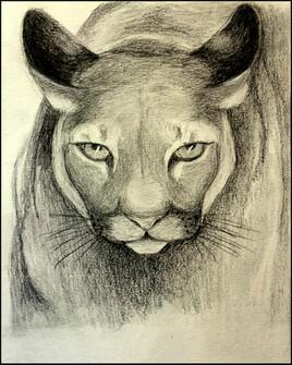 Puma.