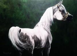 chevale arabe