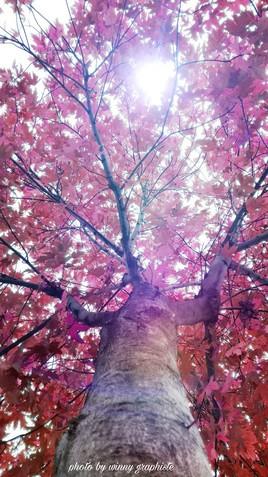 L'arbre aux faux air Japonais