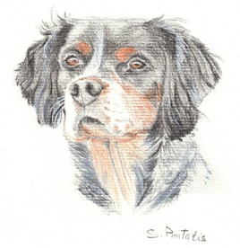 Portrait de chien