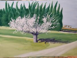 Cerisier au bord de la Durance