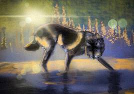 Loup marchant dans la neige