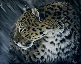 Le léopard d'amour face au vent
