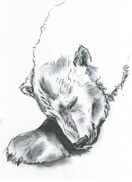 L'ours blanc, un des derniers....