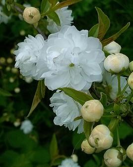 my beautiful flower 2