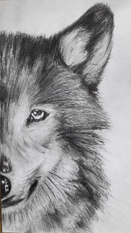 Loup Géant ( Nymeria ) Game Of Trown