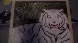tigre blanc dans une forêt de bambou